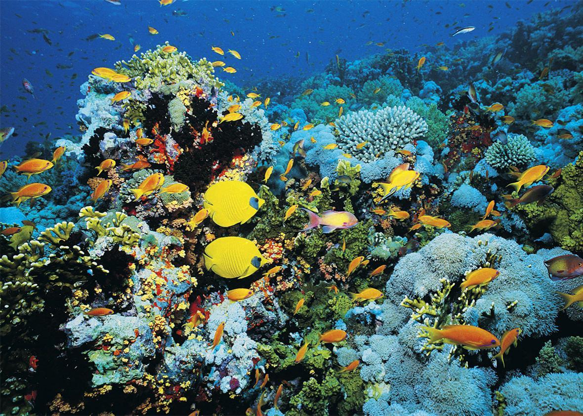 Great Barrier Reef Facing Mass Bleaching