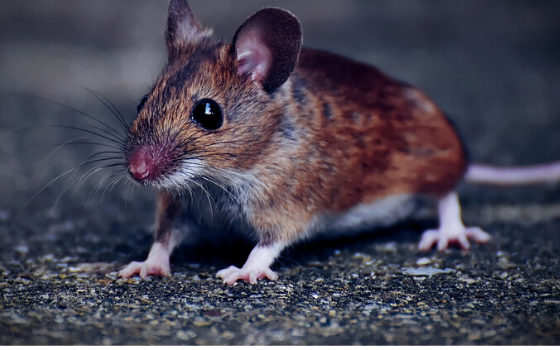 Hantavirus In China: